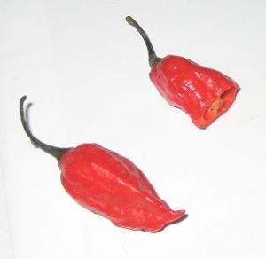ghost chilis ghost chilis