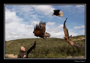 tony hawk tony hawk