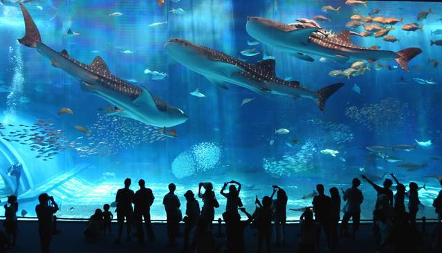 The World's Second Largest Aquarium Tank – Kuroshio (Black Current) Sea; Okinawa, Japan