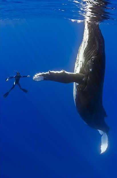 diver whale high five The Friday Shirk Report   August 21, 2009 | Volume 19