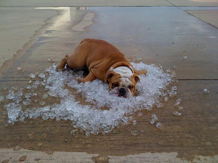dog on ice The Friday Shirk Report   September 4, 2009 | Volume 21