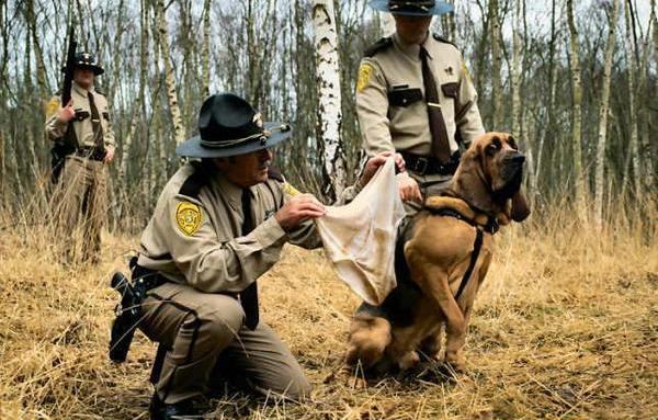dog smelling underwear fml The Friday Shirk Report   November 6, 2009   Volume 30