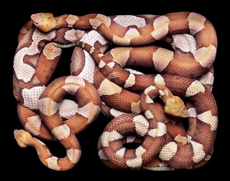 camoufalge-snake-pattern-print-color