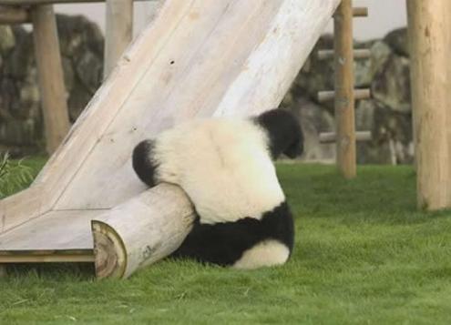 panda fail 11 Reasons why the Bronze goes to... Pandas!