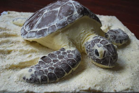 sea turtle cake Picture of the Day   February 8, 2010