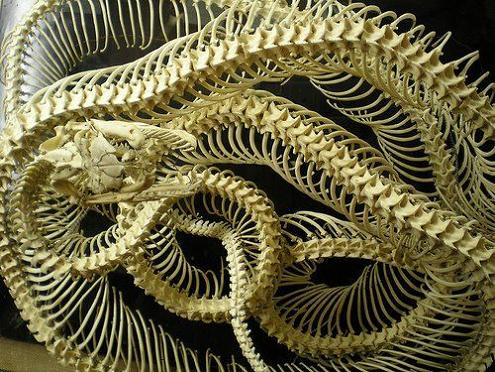 skeltons of snakes Slithery Snake Art