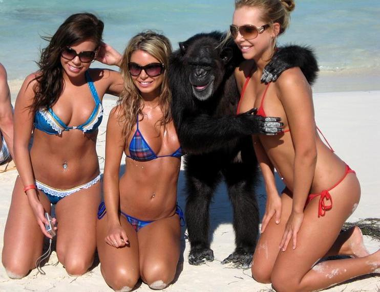 monkey with three hot girls in bikinis on beach copping feel The Friday Shirk Report   March 5, 2010 | Volume 47