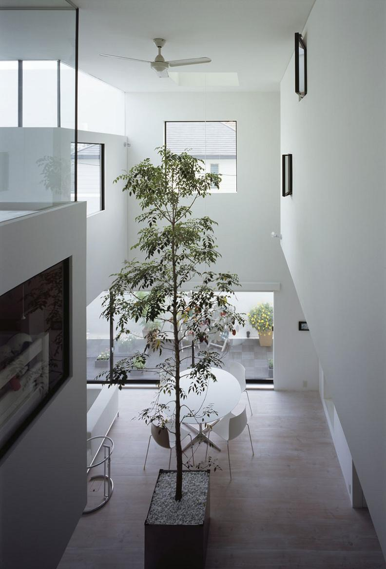 tall tree inside house highest ceilings Want to See a Lamborghini in a Living Room?
