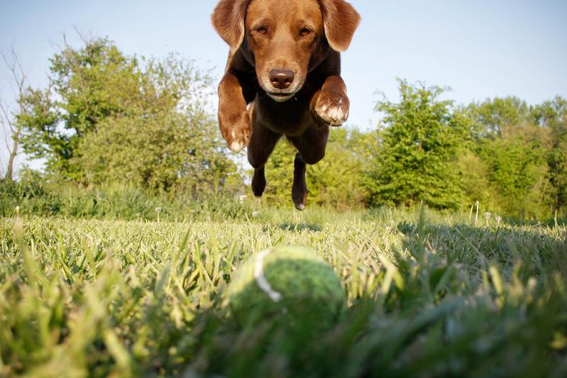 dog in midair jumping towards ball head on shot Picture of the Day   May 8, 2010