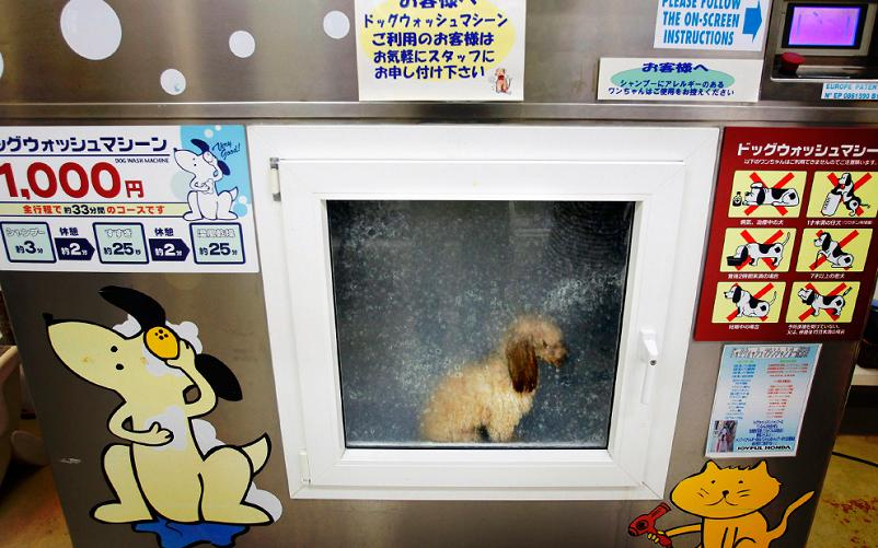 dog inside japanese dog washing machine Picture of the Day   May 17, 2010
