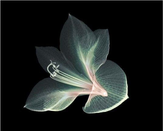 x ray nature The X Ray Vision of Nick Veasey