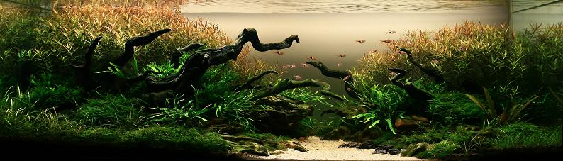 1 nguyen tien dung 2009 iaplc grand prize The Top 25 Ranked Freshwater Aquariums in the World