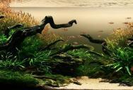 Underwater Gardening: The World's Best Aquariums of 2009