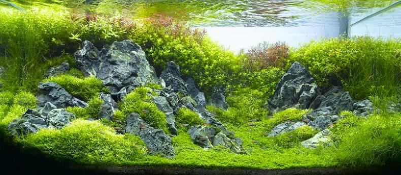 21 hironori handa underwater landscape Underwater Gardening: The Worlds Best Aquariums of 2009