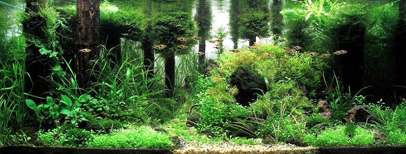 4 josh sim kh underwater forest aquarium Underwater Gardening: The Worlds Best Aquariums of 2009