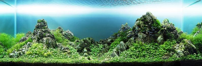 6 chow wai sun underwater mountain Underwater Gardening: The Worlds Best Aquariums of 2009