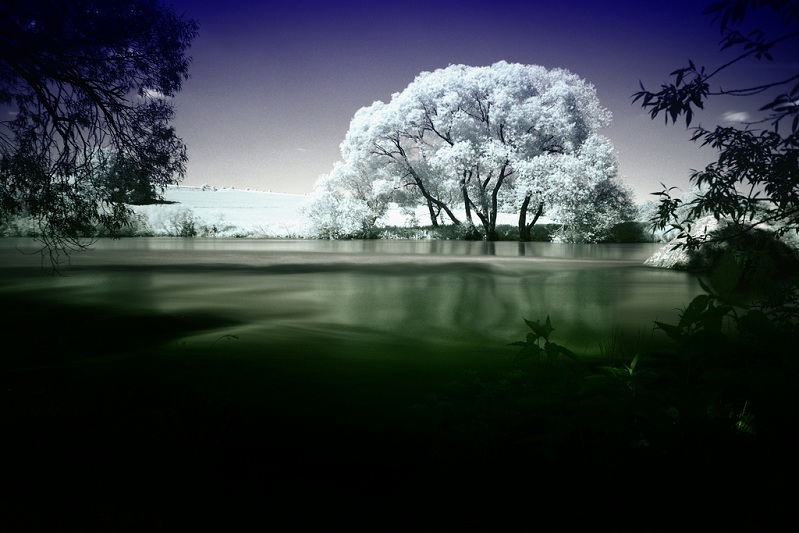 all white tree infared photograph Picture of the Day   June 9, 2010