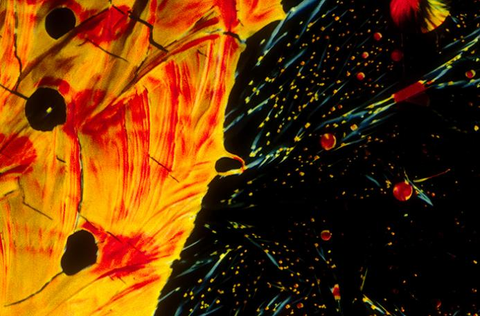 beer closeup japanese dry lager Alcoholic Art: Liquor Under a Microscope
