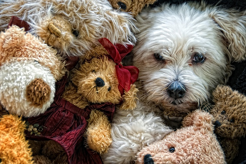 dog amongst surrounded by teddy bears Picture of the Day   June 14, 2010