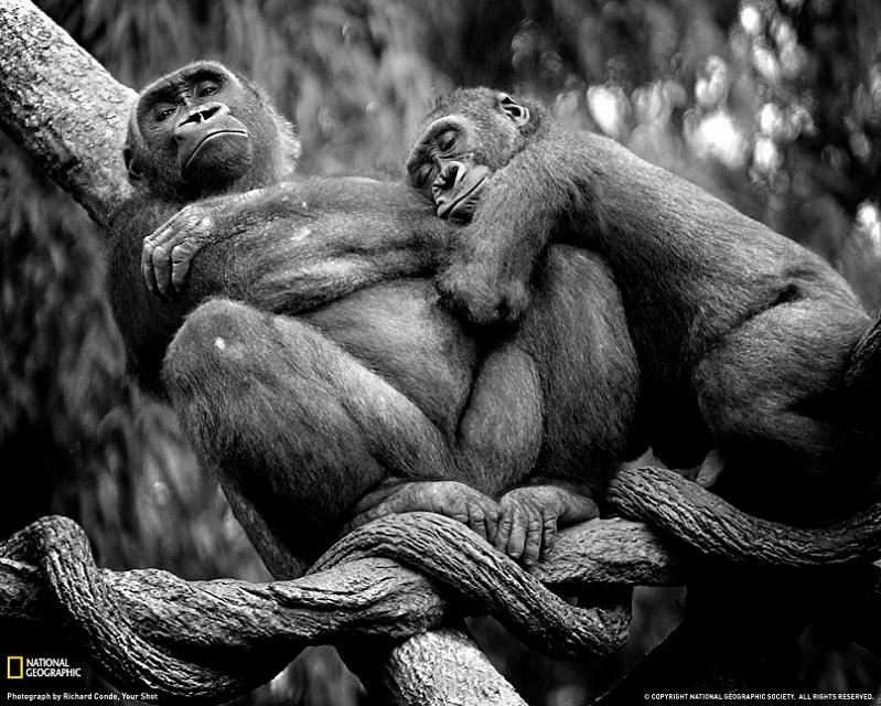 shrewdness of apes 10 Bizarre Names for a Group of Animals