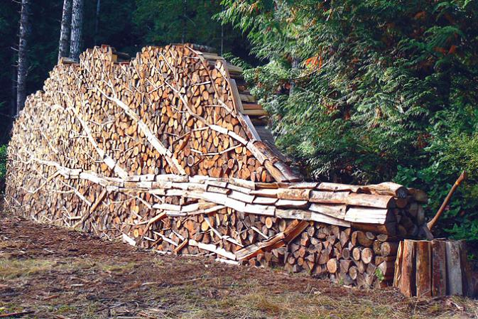 tree made of logs Picture of the Day   June 20, 2010