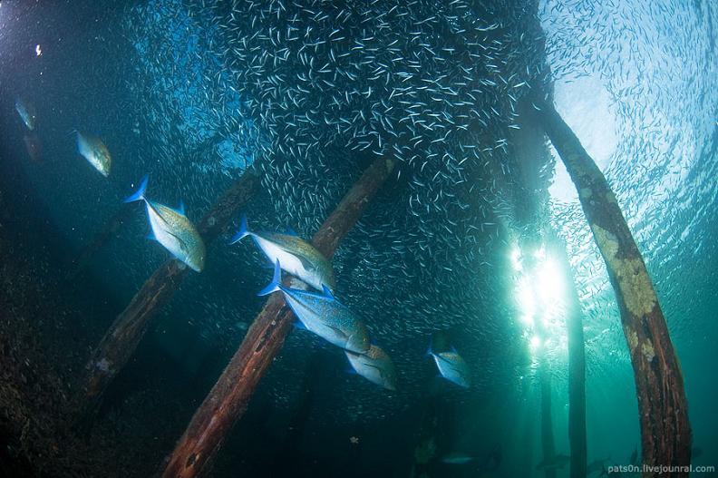 big school of fish 15 Fascinating Schools of Fish