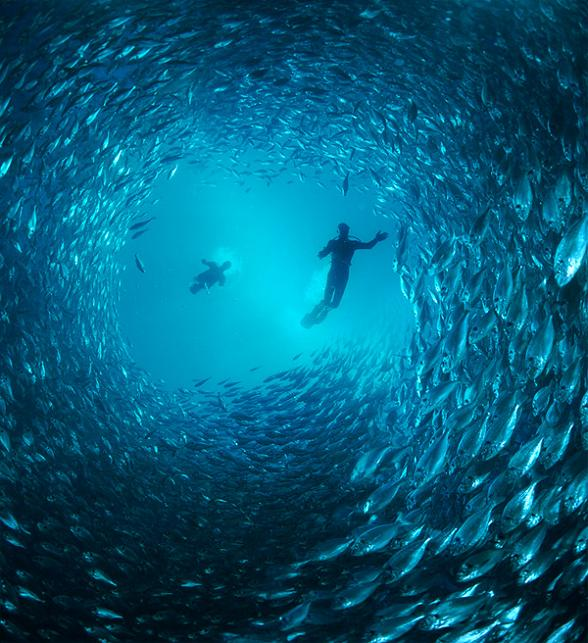 diver in tunnel of fish 15 Fascinating Schools of Fish