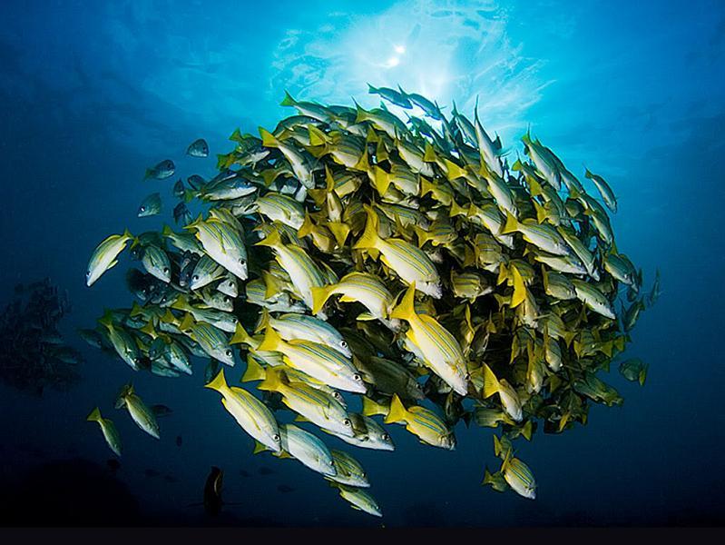 fish ball under water 15 Fascinating Schools of Fish