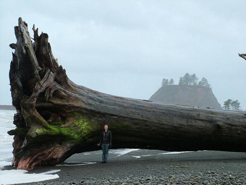 largest piece of driftwood ever massive tree Top Animal & Nature Posts of 2010