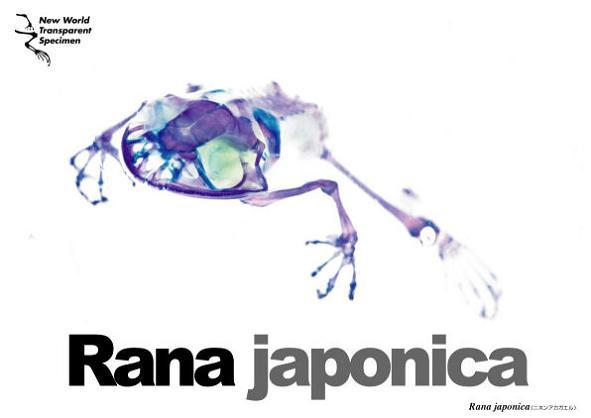 new world transparent specimen 21 Specimens with Transparent Skin and Rainbow Skeletons