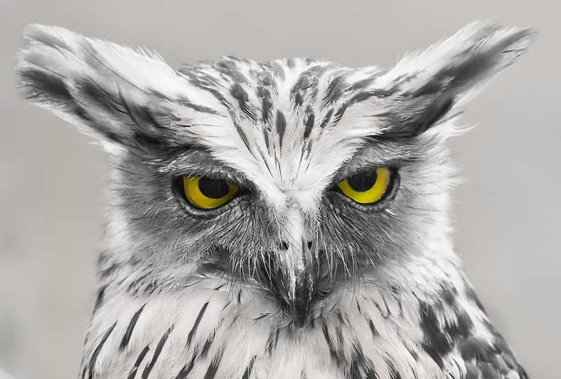 white owl gives look of disapproval Picture of the Day   July 27, 2010