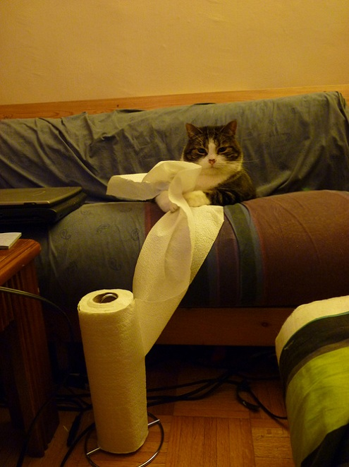 cat with paper towel Picture of the Day   August 19, 2010