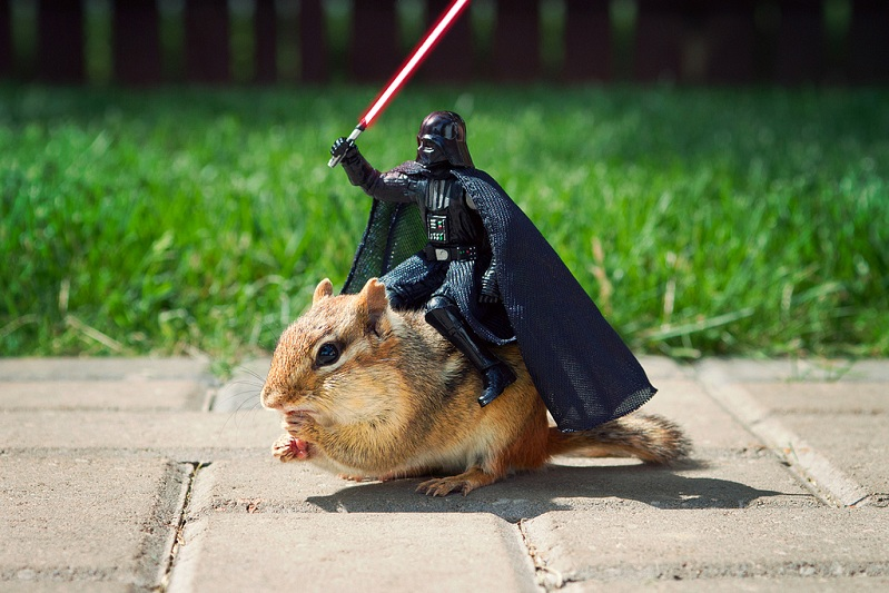 darth vader riding a chipmunk Picture of the Day   August 5, 2010