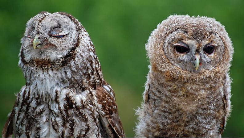 never-talk-to-you-again-upset-owl