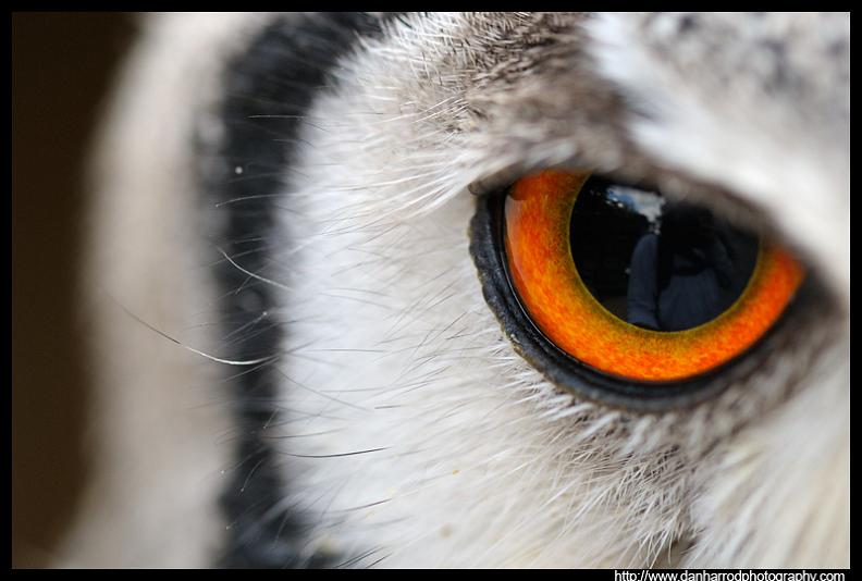 owl-eye-close-up-macro