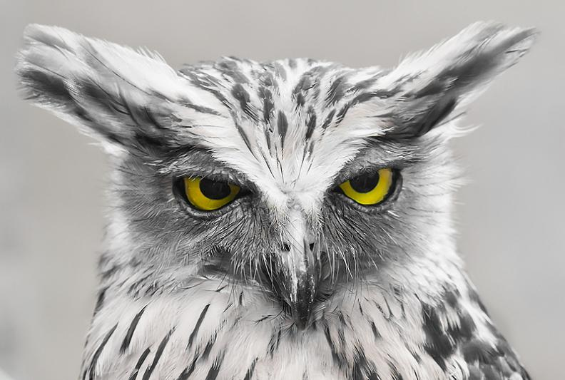 owl-look-of-disapproval