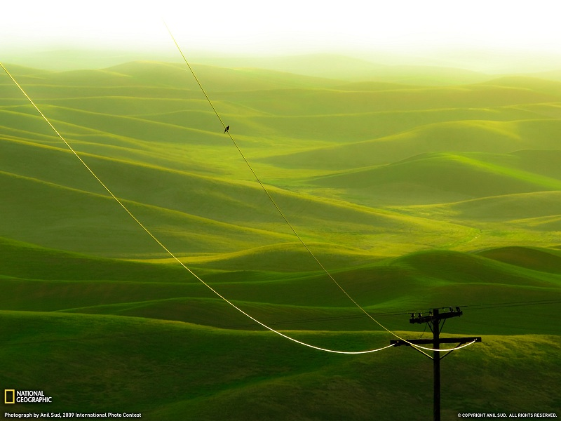 rolling green hills landscape palouse washington Picture of the Day   August 10, 2010