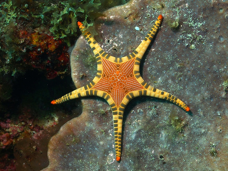 amazing star fish program Picture of the Day   September 21, 2010