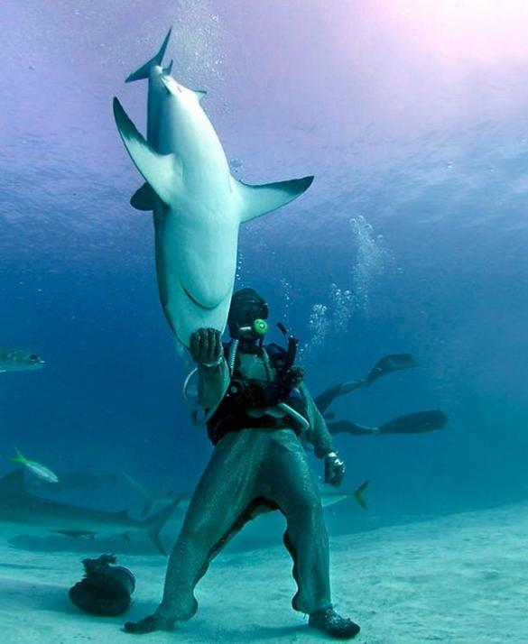 diver holding a shark by its head The Friday Shirk Report   September 3, 2010 | Volume 73