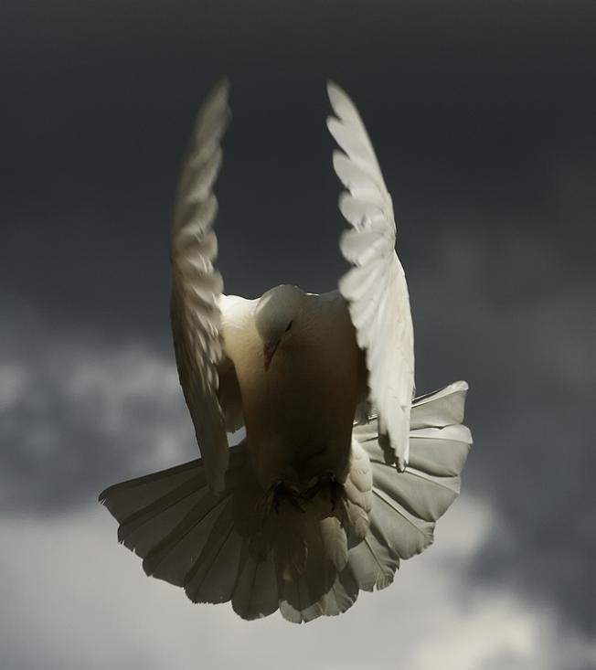 angel bird 25 Stunning Photographs of Birds in Flight