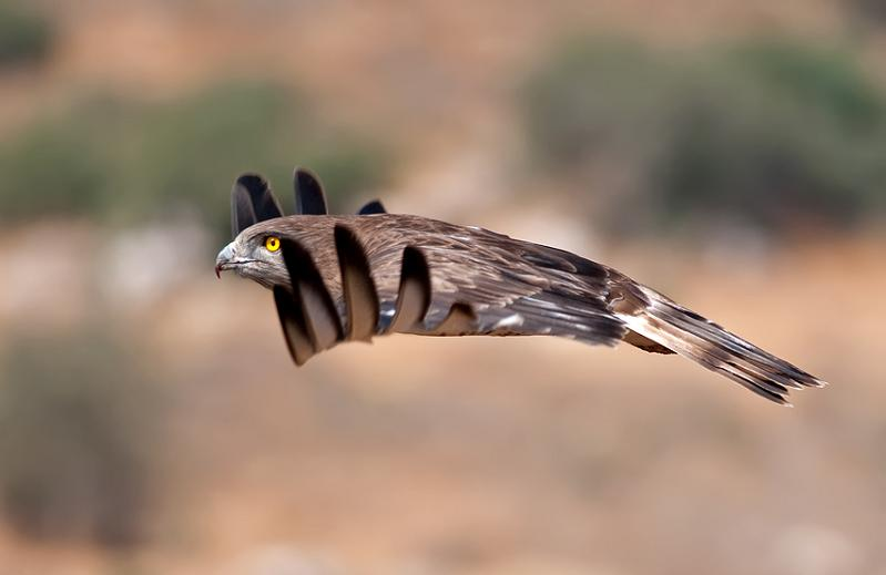 bird in mid flight 25 Stunning Photographs of Birds in Flight