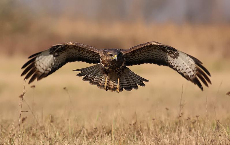 eagle flying 25 Stunning Photographs of Birds in Flight