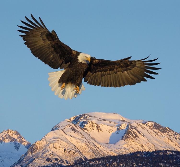 eagle 25 Stunning Photographs of Birds in Flight