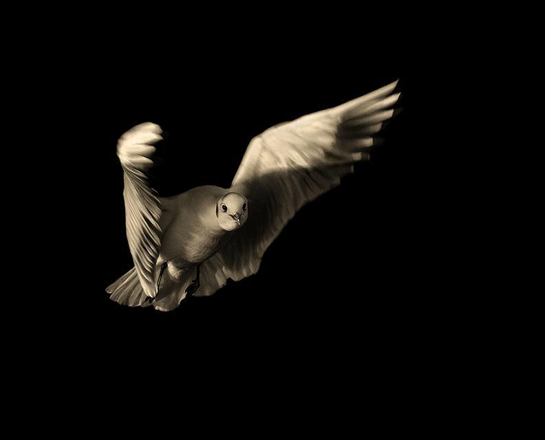 flying bird 25 Stunning Photographs of Birds in Flight
