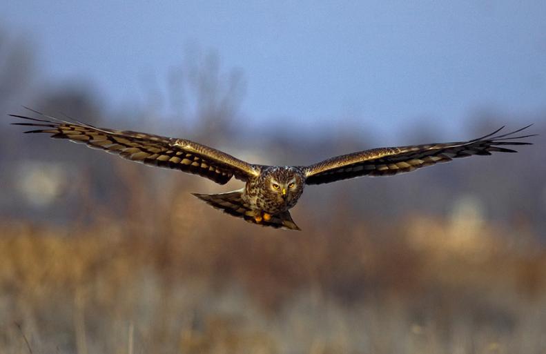 25 Stunning Photographs of Birds in Flight