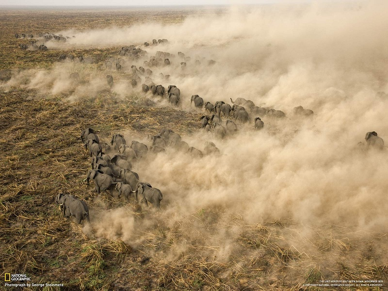 elephant herd sudan george steinmetz Top 10 Facts of the Worlds Largest Land Animal [20 pics]