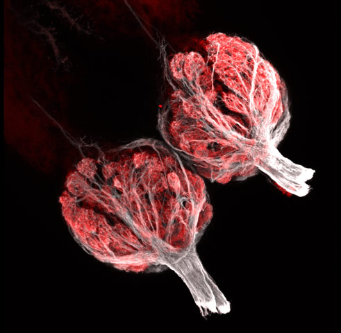 zebrafish olfactory bulbs 250x Winners (07 10) from Nikons Small World Competition [20 pics]