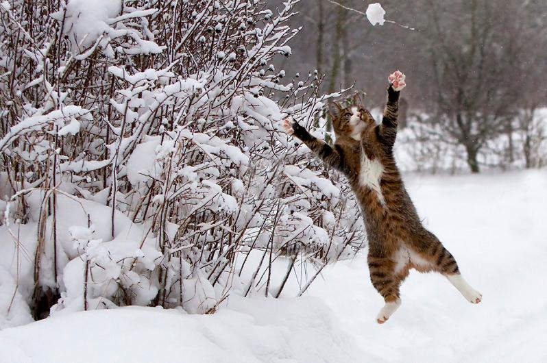 cat catching snow Top Animal & Nature Posts of 2010