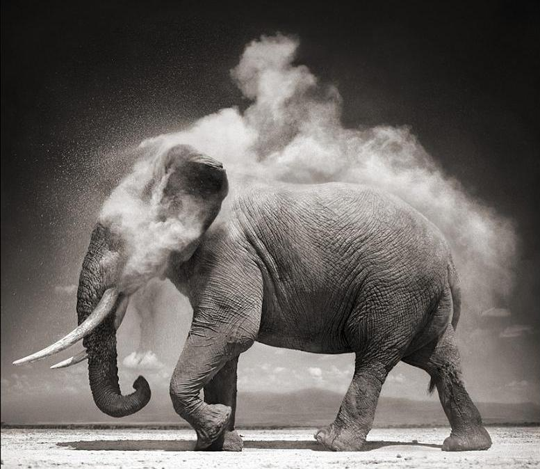 elephant-cooling-itself