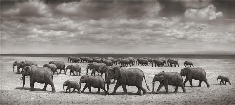 elephant family Top 10 Facts of the Worlds Largest Land Animal [20 pics]
